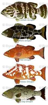 Five Atlantic Grouper fish