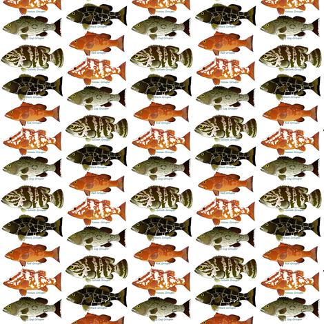 Five Atlantic Grouper fish fabric by combatfish on Spoonflower - custom fabric