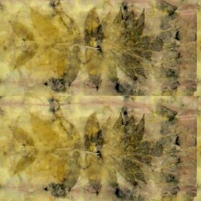 Sumac Madder Botanical Print 1