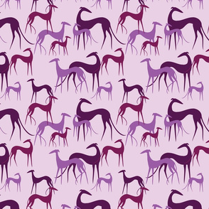 sighthounds magenta