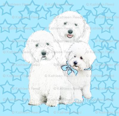 bichons_in_blue_stars