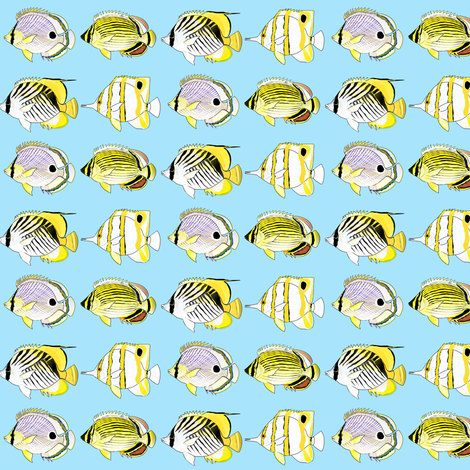 4 Butterflyfish  fabric by combatfish on Spoonflower - custom fabric