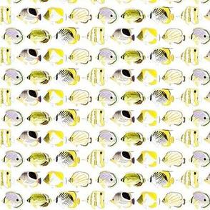 7 Butterflyfish