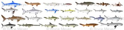 27 Sharks