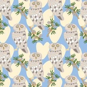 Little Owl blue