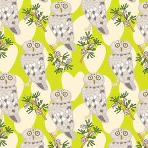 Little Owl Lime Green