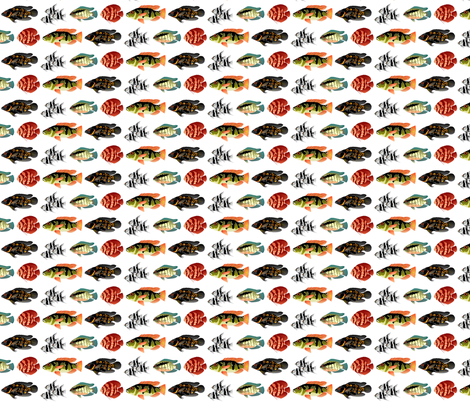 5 Tropical Amazon Cichlids fabric by combatfish on Spoonflower - custom fabric