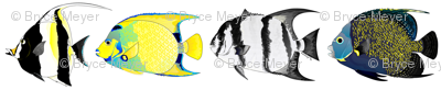 Four Angelfish