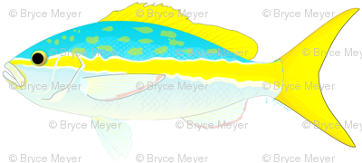 Yellowtail Snapper Pattern