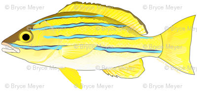 Bluestripe Snapper fish