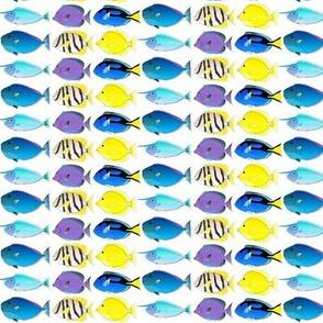 Tang, Surgeonfish, and Unicornfish