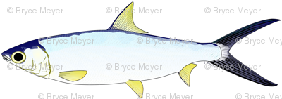 Milkfish Pattern