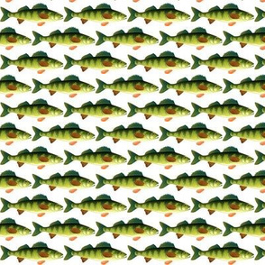 Yellow Perch fish pattern
