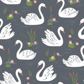 Swans on Dark Grey