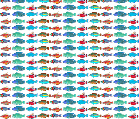8 Tropical Indo-Pacific Wrasse and Parrotfish fabric by combatfish on Spoonflower - custom fabric