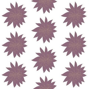 Hellebore Purple Lady