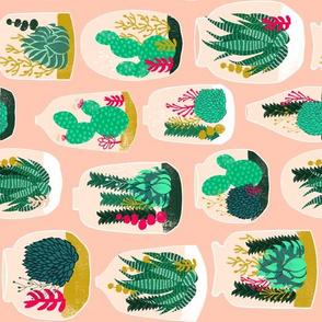 terrariums // railroad sweet little cactus plants houseplants succulents
