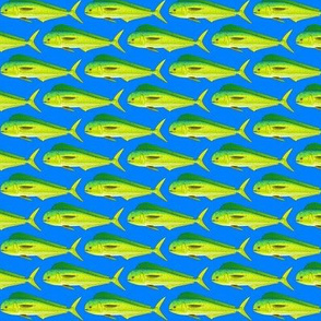 Mahi-mahi Dolphinfish dark blue background