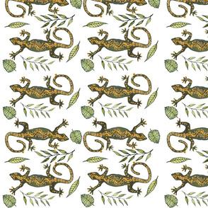 Lady Gecko