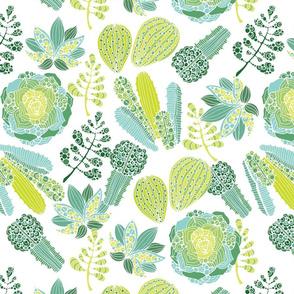 Succulents ehite