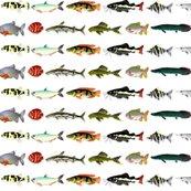 Rallamazonfish_shop_thumb