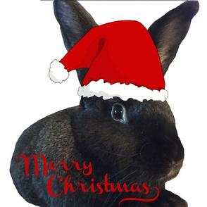 Merry Christmas, Bunny!