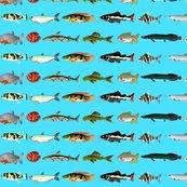 Rrrrallamazonfishsbb_shop_thumb