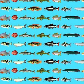 23 Amazon River Fishes on blue