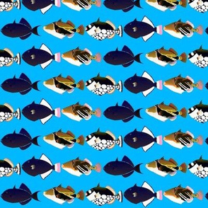 5 Tropical Pacific Triggerfish on blue