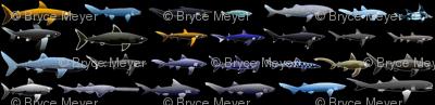 27 Sharks in negative