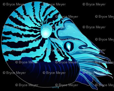 Chambered Nautilus Neg Black Mirror