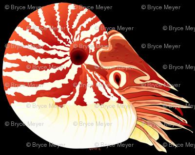 Chambered Nautilus Black Mirrored
