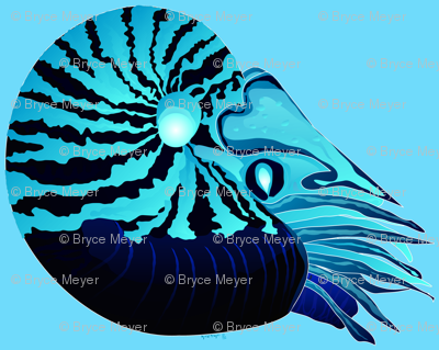 Chambered Nautilus Negative Blue Mirror