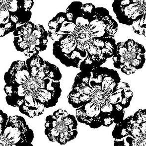 Black and White Floral on White
