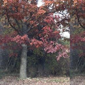 Oak in Autumn Splendor