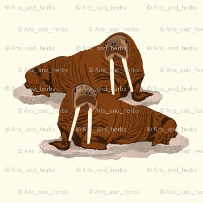 Pacific Walrus 2