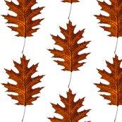 Rrred-oak-leaf_shop_thumb