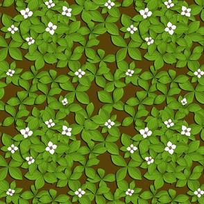 Miniature Dogwood Forest