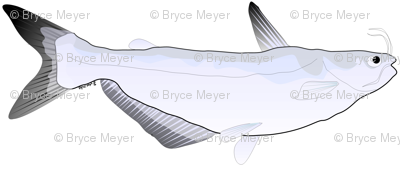 Blue Catfish pattern
