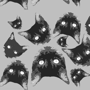 Cat Fabric - Lyla
