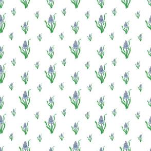 pearl hyacinth white