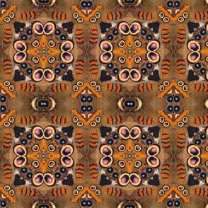 buckeye butterfly kalei III