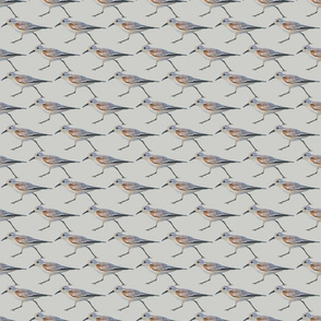 shore birds in watercolor
