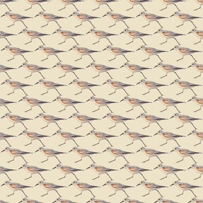 Sand Pipers on Sand Colored Background