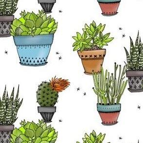 Succulents - Smaller Size