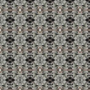 lichens0001