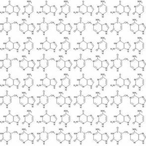 DNA base pairs black