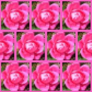 Dean's Rose Blossom Mosaic