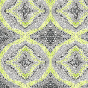 Grey_Green_Lime_Coloration