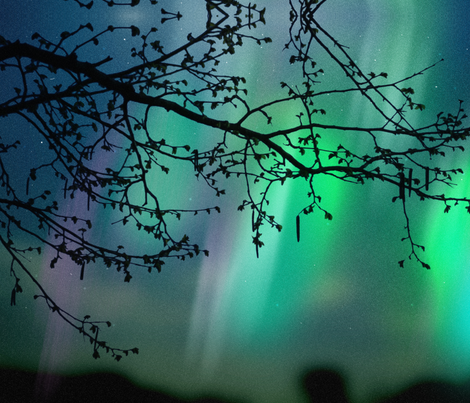 Aurora Borealis and Tree Branch fabric by mjrojas on Spoonflower - custom fabric